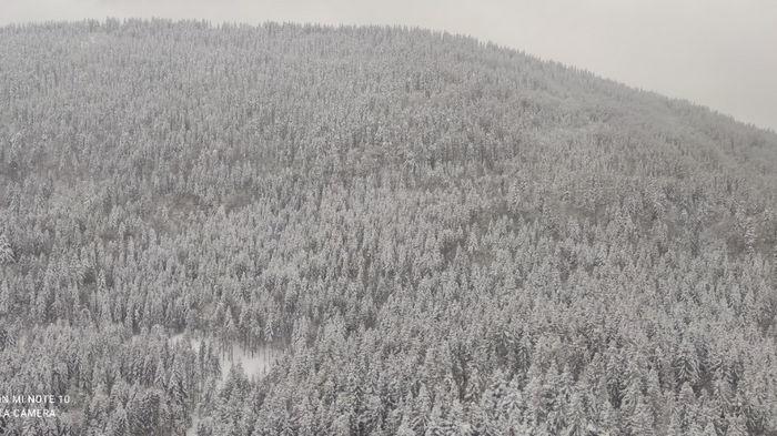 В Карпатах девятые сутки ищут лыжника: к поискам привлекли Супер пуму (видео)