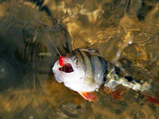 Особенности осенней ловли карася. Обеспечиваем крупный улов!