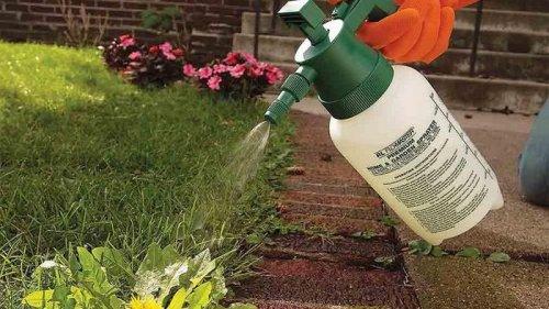 Гербициды помогают защитить растения от сорняков