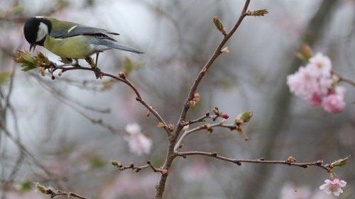 Синоптики озвучили прогноз погоды на март