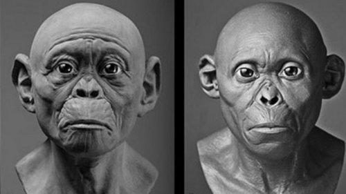 Ученые воссоздали облик древних предков человека (фото)