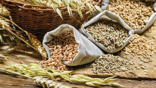Близкий к рекордному: украинцам пообещали хороший урожай зерна