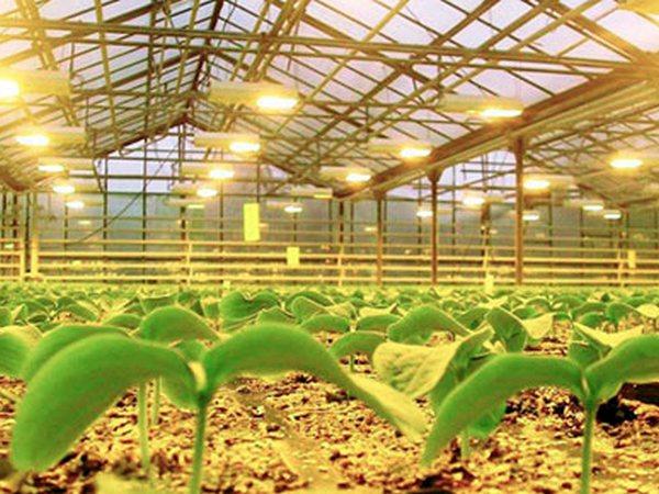 Светодиодные светильники для теплиц