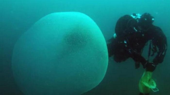 Подводное яйцо. Биологи смогли разгадать загадку непонятных желеобразных шаров в морях Норвегии (фото)