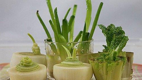 Как вырастить овощи из очистков: познавательный лайфхак