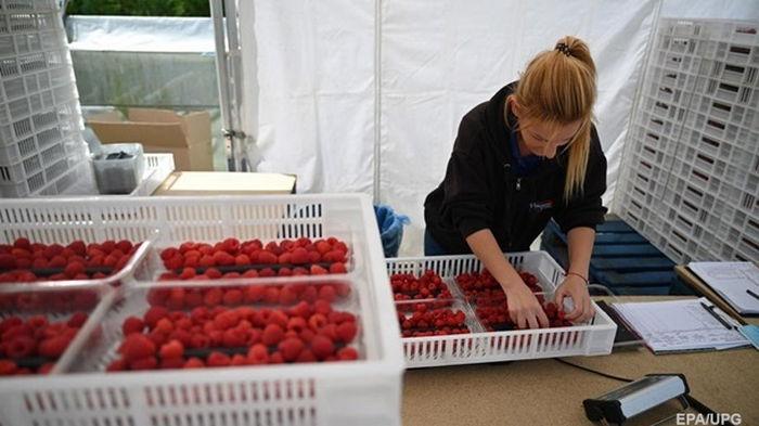 Украина и Германия обсуждают трудоустройство сезонных рабочих
