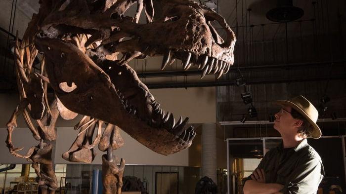 Все не как в кино? Тираннозавры могли охотиться стаями: новое исследование