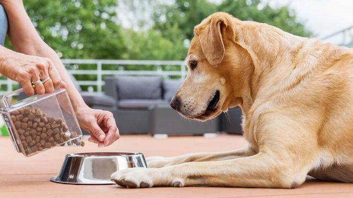 Основные преимущества корма 4 лапы для собак