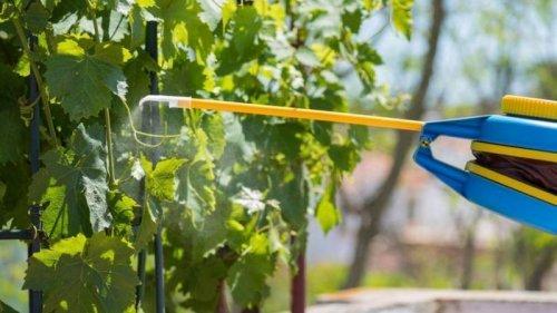 Прованто Вернал - инсектицид, который поможет избавиться от вредителей