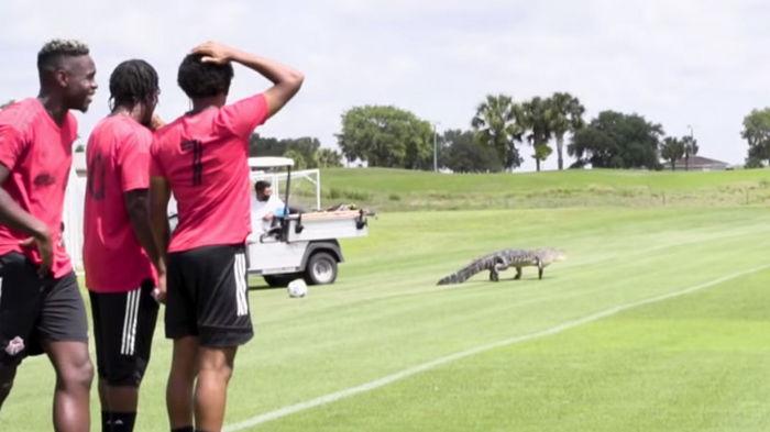 Во время тренировки канадского клуба на поле выбежал аллигатор и напугал футболистов (видео)