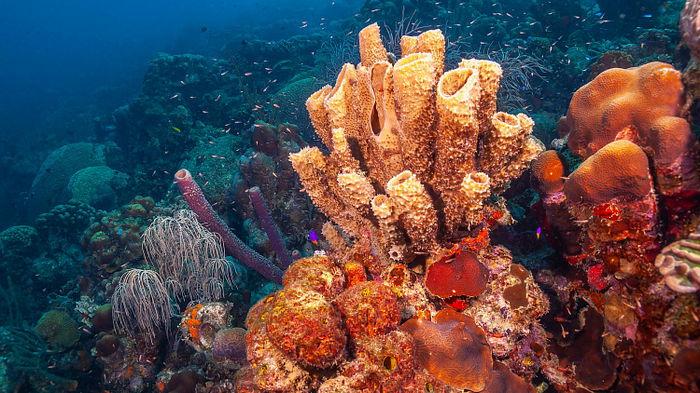 Ученые совершили неожиданное открытие о морских губках