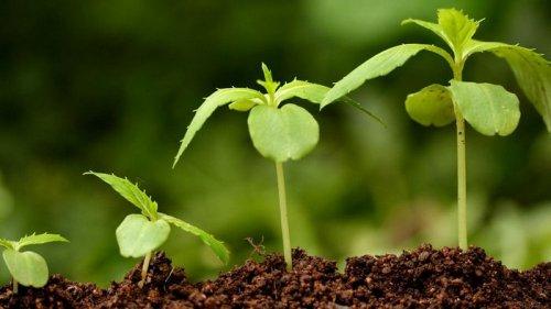Чем подкармливать растения?