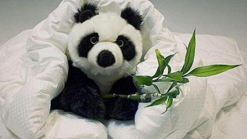 Одеяло из бамбука: достоинства и недостатки