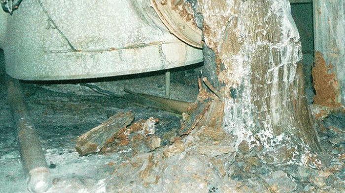 В завалах под разрушенным реактором ЧАЭС усиливаются ядерные реакции – Science