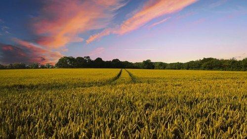 Стоимость земли после запуска рынка может возрастать до пяти раз – Шмыгаль