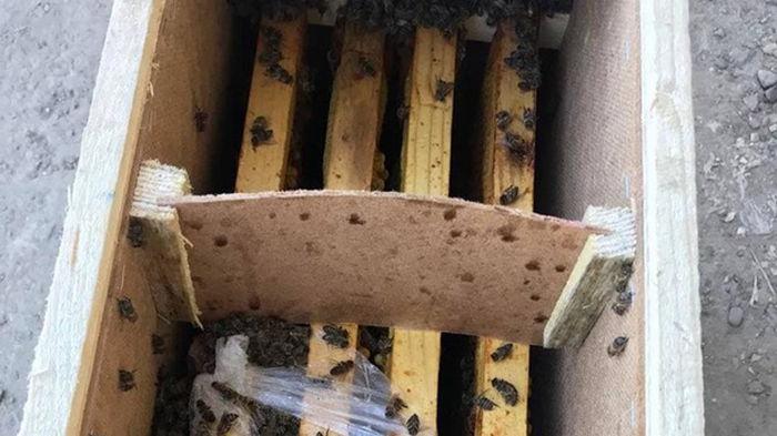 Пчелы в посылках Укрпочты начали оживать (видео)