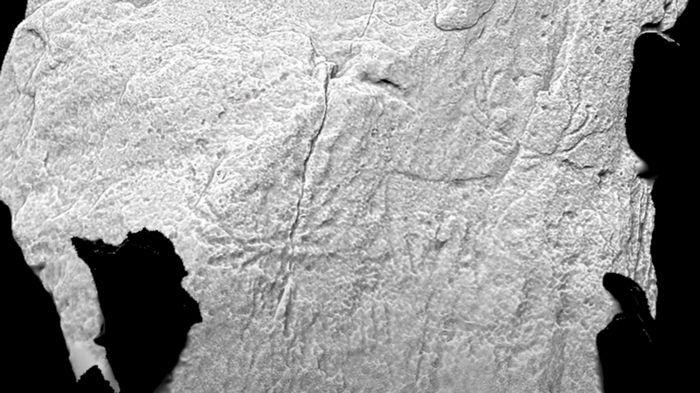 В Шотландии впервые обнаружили изображения доисторических животных (видео)