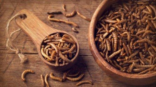 Хрустящие жуки и мучные черви. В ЕС разрешили подавать и есть насекомы...