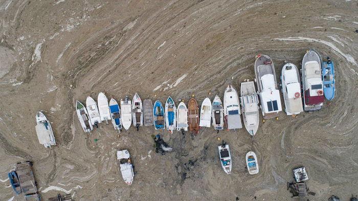 Мраморное море в Турции покрылось слизью. Эрдоган говорит об угрозе для Черного моря: фото