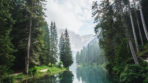В Минэкологии рассказали о перспективах миллиарда деревьев Зеленского
