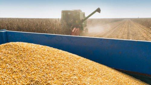 США прогнозируют рекорд урожая пшеницы в Украине в 2021/22 маркетинговом году