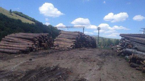 В Кабмине предлагают отказаться от моратория на экспорт леса