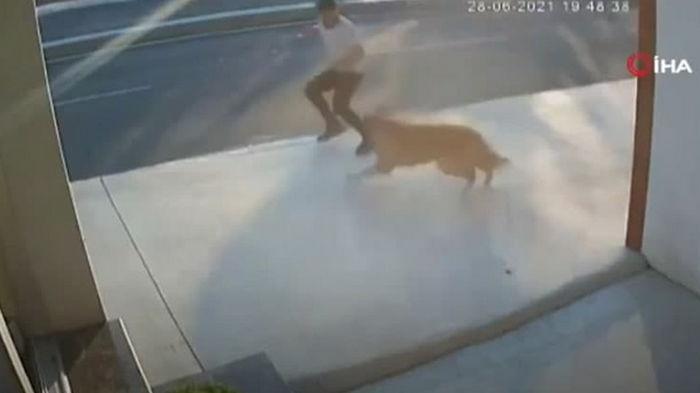 В Стамбуле мужчина попал под грузовик из-за собаки (видео)