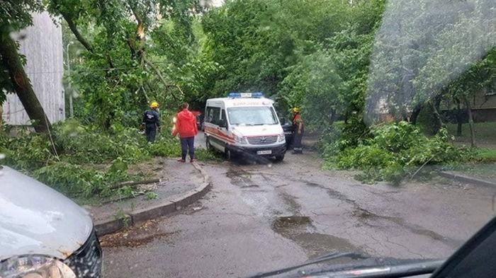 Непогода в Киеве: повалены около 150 деревьев (видео)