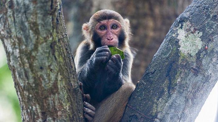 В Китае зафиксирована смерть от вируса обезьяны