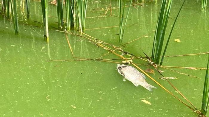В Черкасской области погибла рыба в водохранилище