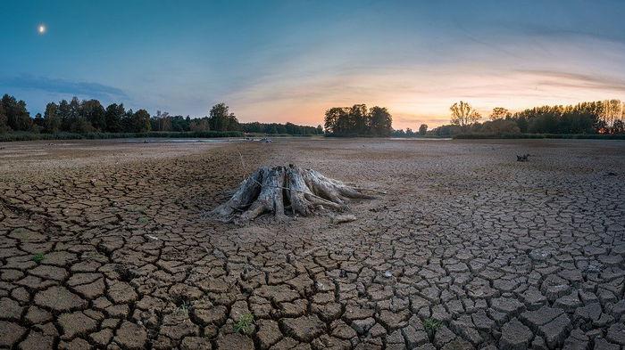 Природные катаклизмы бьют по урожаям: цены близки к рекорду за 10 лет – Bloomberg