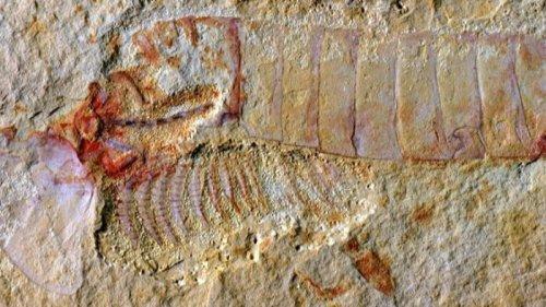 Палеонтологи обнаружили мозг древнего животного возрастом 310 млн лет
