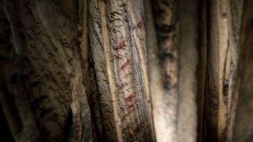 В Испании найдены рисунки неандертальцев, которым 60 тыс. лет (фото)