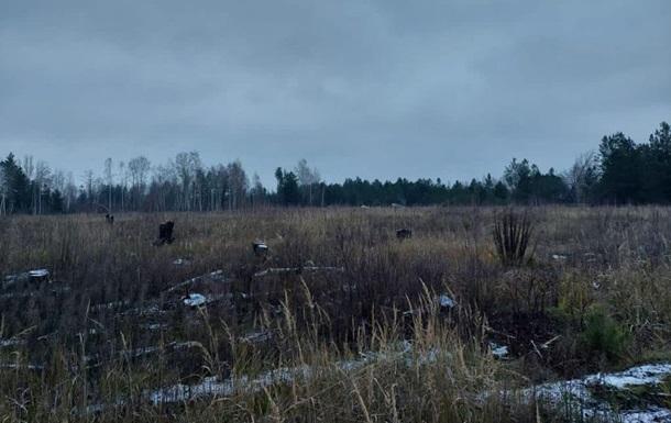 На Киевщине разоблачили незаконные вырубки леса на 15 млн грн