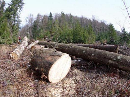 Евросоюз поддерживает украинцев в желании защитить свои леса