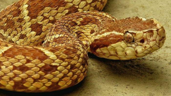 В Бразилии обнаружили эффективность яда змеи против COVID-19