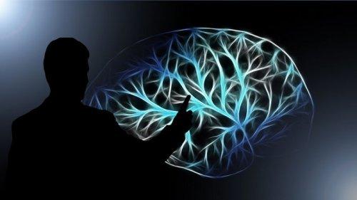 Что жизненно необходимо вашему мозгу