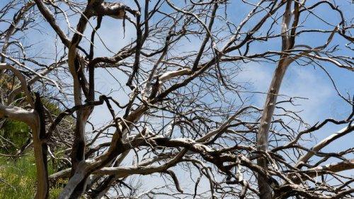Ученые узнали, как мертвые деревья влияют на углеродный цикл Земли