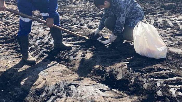 На Сумщине произошел разлив нефти на поле