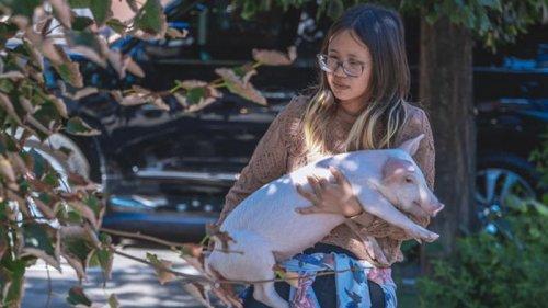 В Днепре иностранка живет в квартире со свиньей и теленком (видео)