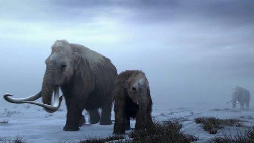 Проект Colossal. Генетики задумали воскресить мамонтов до 2030 года