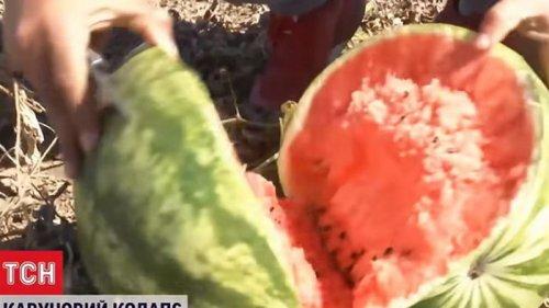 Фермеры в Херсонской области уничтожают арбузы (видео)