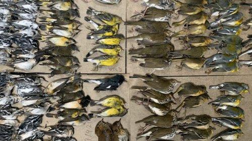 В Нью-Йорке произошел массовый мор птиц