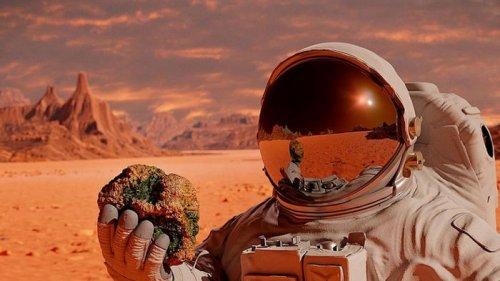 Первый полет на Марс: сколько астронавтов должно полететь, чтобы миссия была успешной
