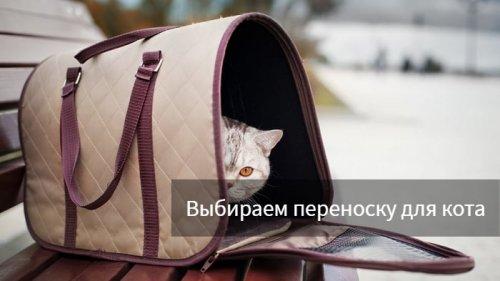 Как выбрать переноску для кота