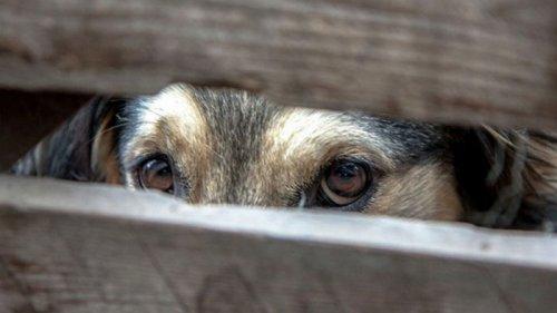 Во Франции договорились принять беспрецедентный закон о защите животны...