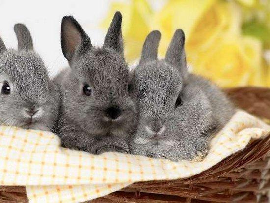 Как правильно подобрать корм для декоративного кролика